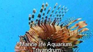 Marine life aquarium - Trivandrum - an amazing feast for eyes