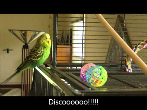 This Is What A Talking Parakeet Sounds Like