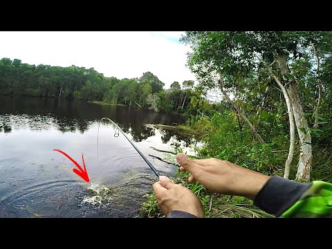 Casting Haruan Spot Tengah Hutan Belantara