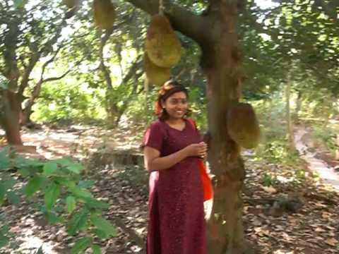 Jackfruit farm Tour India - YouTube