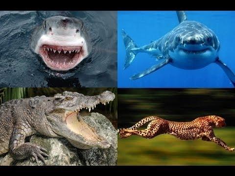 Nat Geo wild - Most Dangerous Animals - National Geographic Documentary