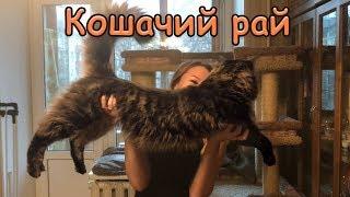 КОШАЧИЙ РАЙ / В гостях у Натальи