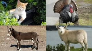 Домашние животные. Изучаем голоса животных