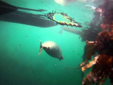 Gairloch greedy seals