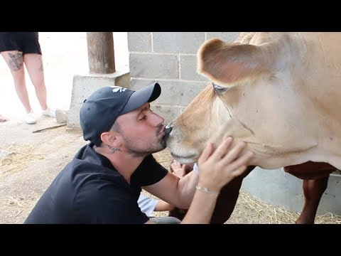 These Dairy Industry Survivors LOVE kisses!
