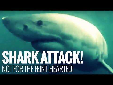 Shark Attacks Surfer: Caught on Video! Warning: Big Great White Shark Attack