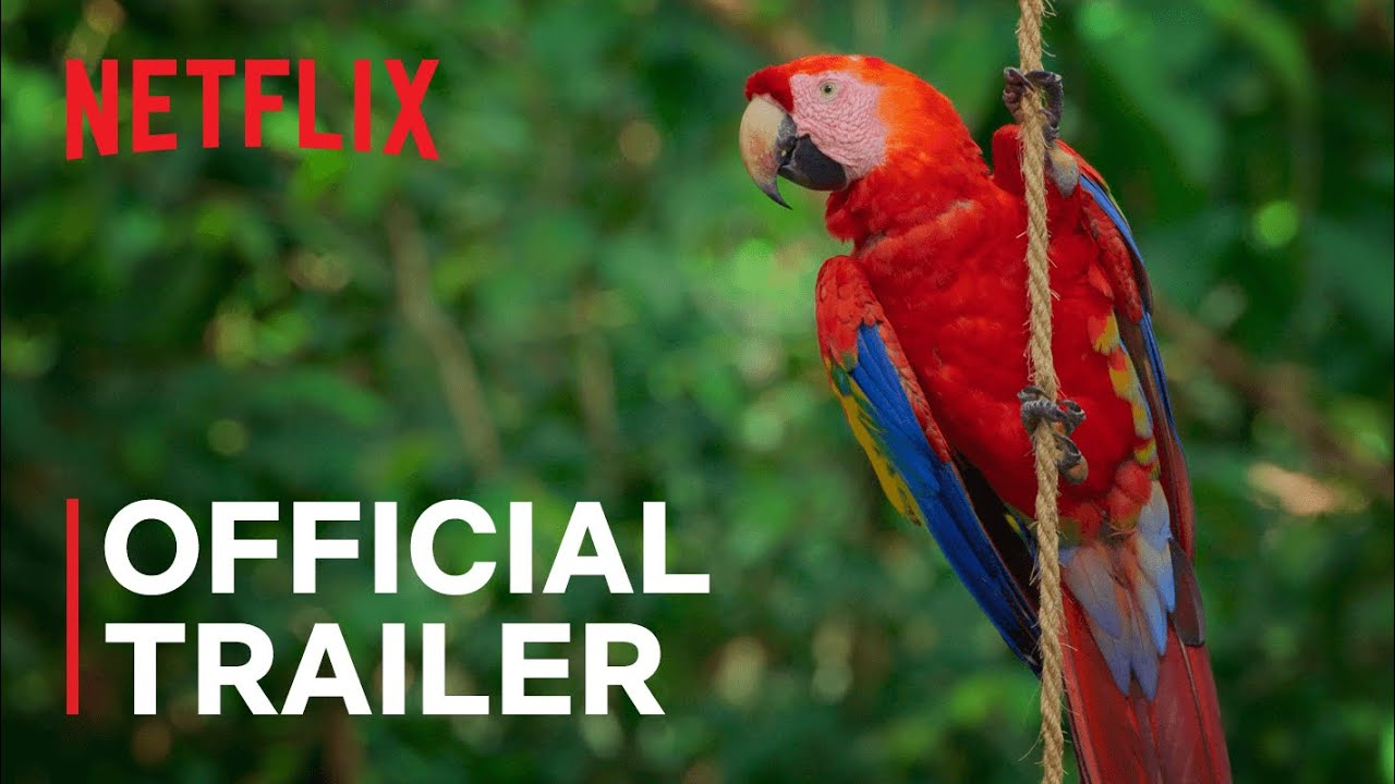 Life in Color with David Attenborough   Official Trailer   Netflix