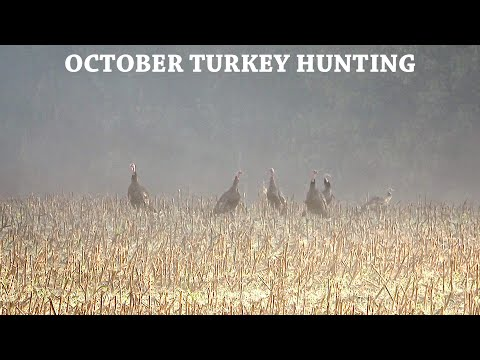 2019 Fall Turkey Hunting Part 1: October