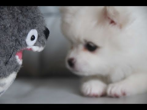 Cute puppy & Totoro - Youtube