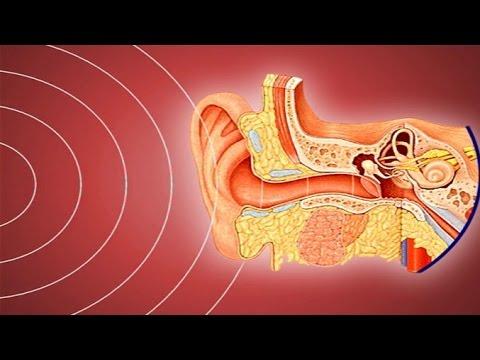 เสียงมาถึงหูได้อย่างไร วิทยาศาสตร์ ป.5