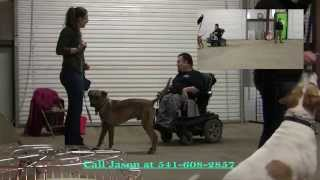 Dog Training In Medford Oregon: Teaching Walking On Leash & Heel 2 By Jason Lake