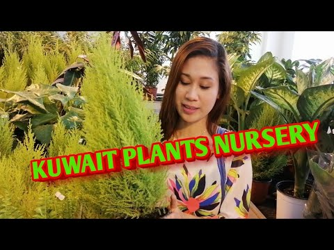 KUWAIT PLANTS NURSERY/ VLOG #4