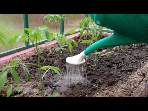 видео: Сотовый поликарбонат ГРИНХАУС-НАНО (часть 2, уход за томатами в первой половине июня)