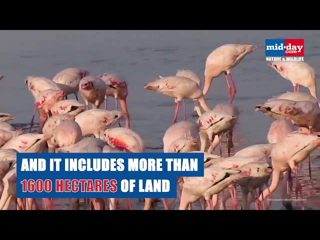 Take a boat ride to watch flamingos up close and personal in Mumbai!