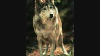 Un lobo por tu amor- Mana