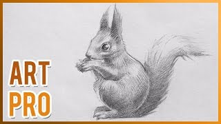 How to draw a Squirrel step by step - Easy and quick