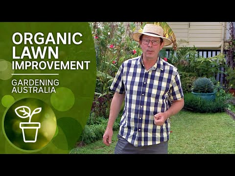 Organic tips to control weeds and improve your lawn