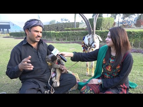 Bandar Aur Bakri Ka Tamasha (Street Monkey and Goat Show)