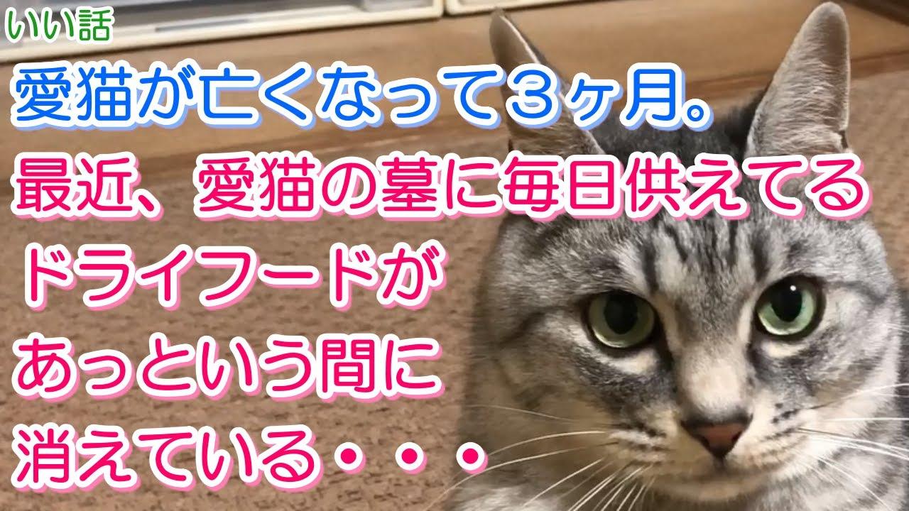 【猫のいい話】愛猫が亡くなって3ヶ月。最近、愛猫の墓に毎日供えてるドライフードがあっという間に消えている・・・