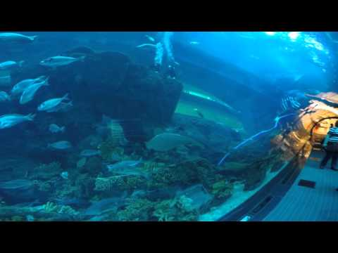 Aquarium of the Dubai mall