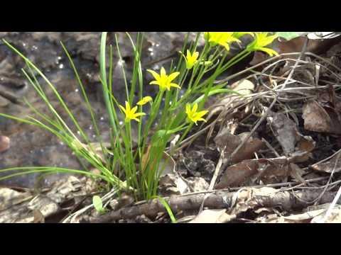 Цветы полевые milakcbuxru