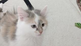 Kitten Close Up 2017-05-14 thumbnail