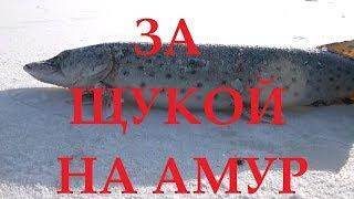 ЗИМНЯЯ РЫБАЛКА на АМУРЕ 10.12.2017