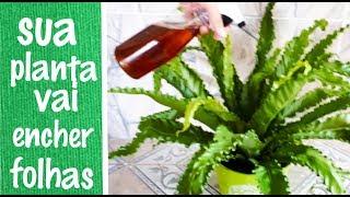 Liquido que Faz sua Planta Aumentar as Folhas