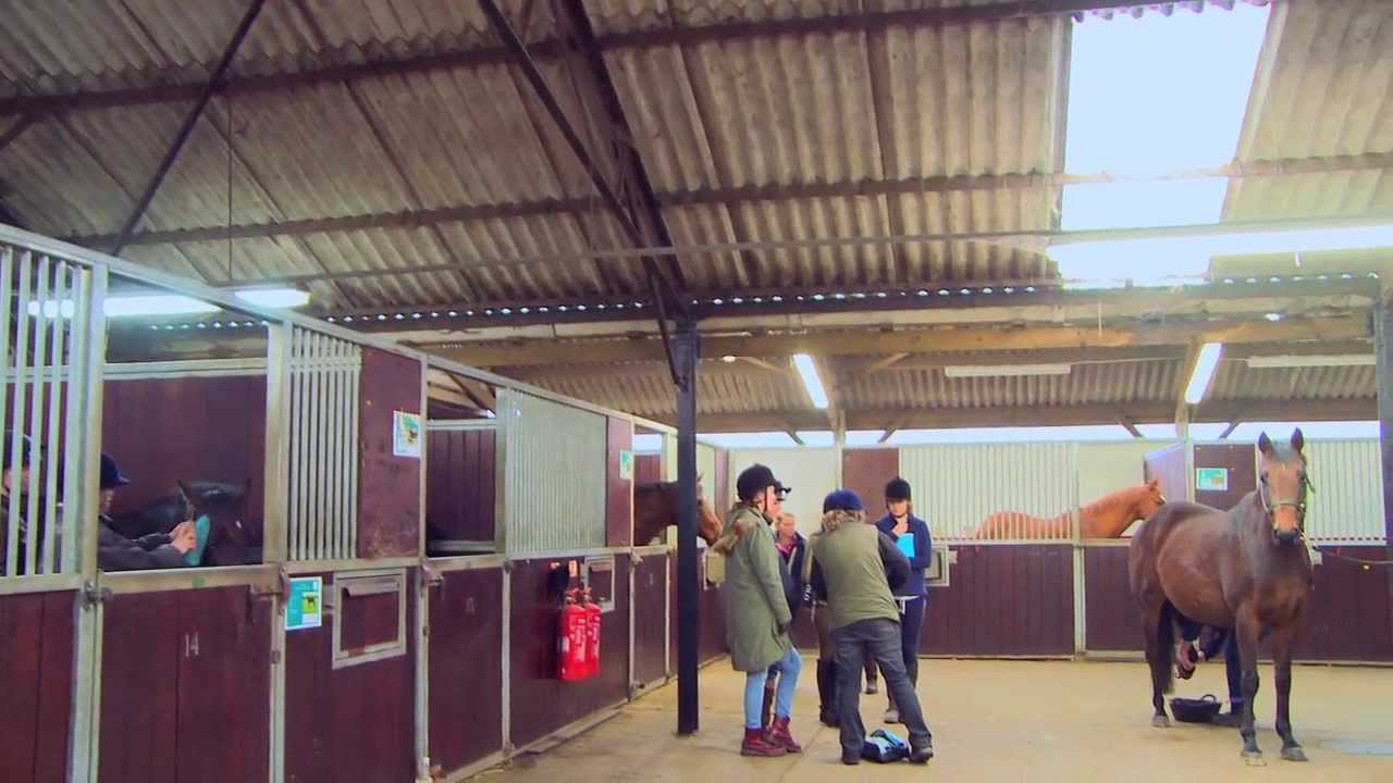 Writtle College Equine Degrees Youtube