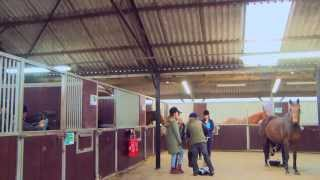 Writtle College equine degrees thumbnail