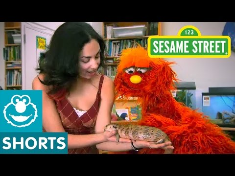 Sesame Street: Science and Nature School | Murray Little Lamb