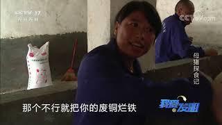 《我爱发明》 20200619 母猪探食记|CCTV农业