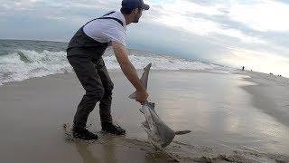 Our DIVERSE Shark Fishing Reels ( PENN - AMBASSADEUR - NEWELL ) & Surf Shark Action