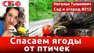 Как уберечь урожай ягод от птиц | видео 4K UHD