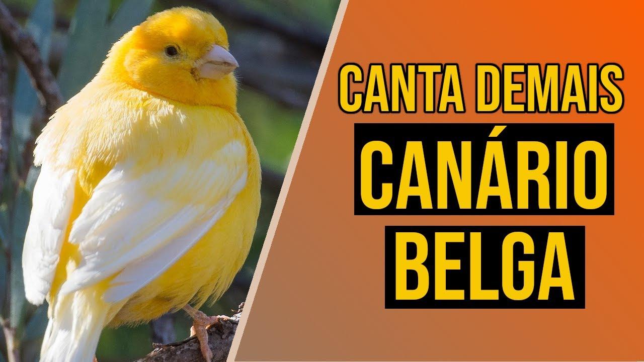 ASSOBIOS PARA BAIXAR CD DE CALOPSITAS