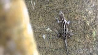 Gambar cover Great Lizard Cuckoo - Edenshorts 2014 Entry: Chris Kidd
