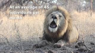 2018 Lion Statistics