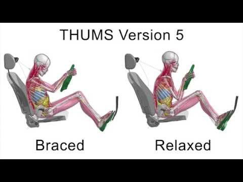 THUMS Version 5 muscle model demo