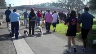 Oc Rescue Westie Walk 2-13-10