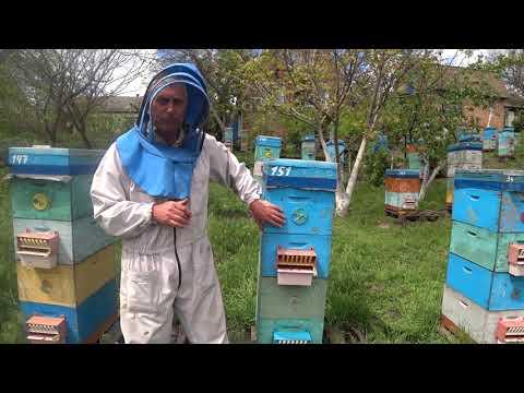 Двухматочное содержание пчелосемей.  300 семей.  Васькун Владимир