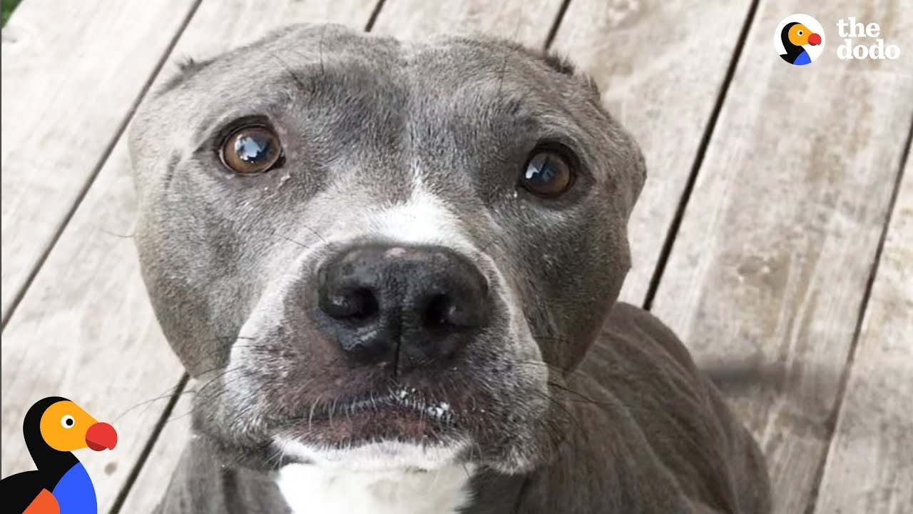 Dog Who Lost Both Her Ears Was Scared Of Everything When She Was Rescued