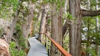 El Alerzal milenario - Parque Nac.Los Alerces - Esquel -Patagonia Arg. YouTube Videos