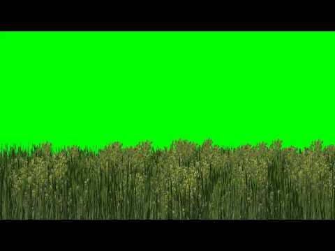 Repeat forest green screen - background green and blue