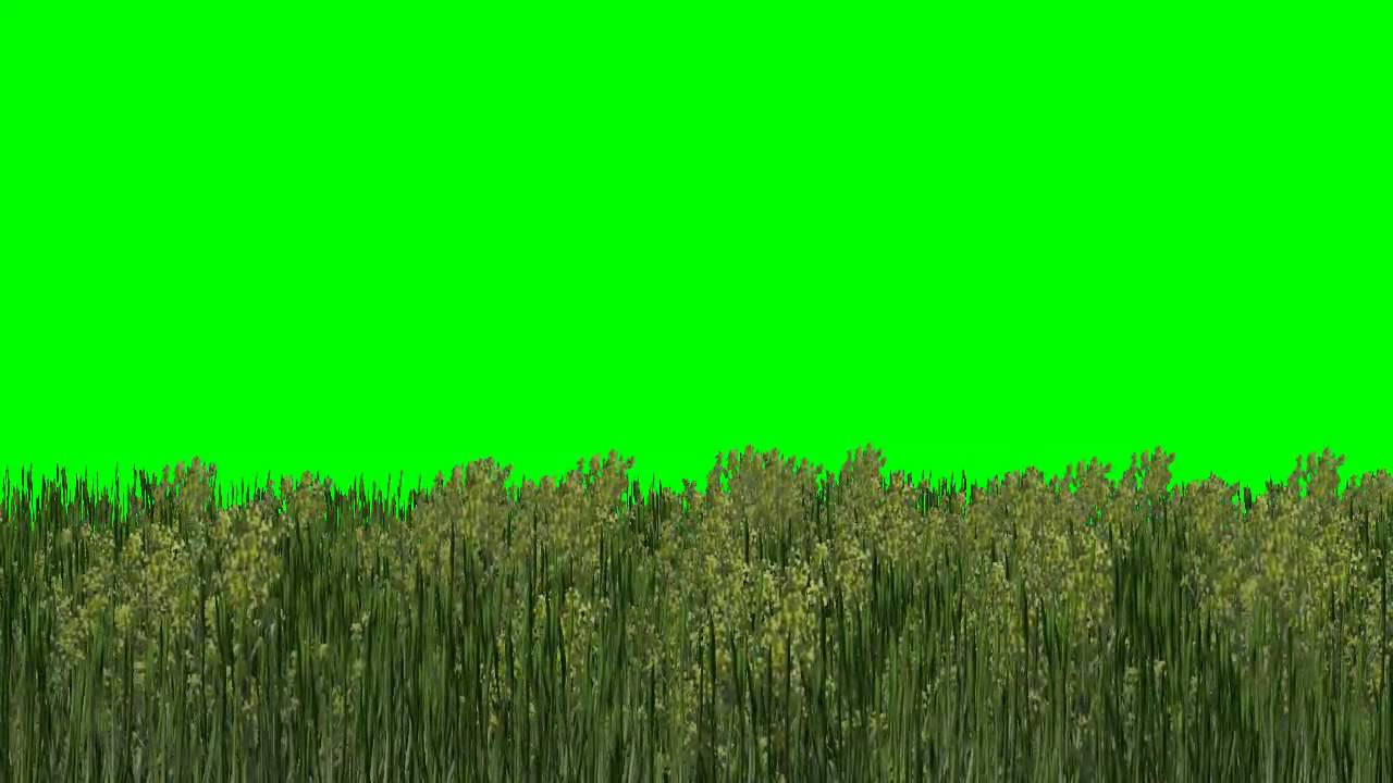 High Grass With Yellow Flowers In The Wind Green Screen Effects