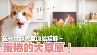 蛋捲開心!送大草原給貓咪~貓草栽培實錄【好味貓日常微知識】EP26 thumbnail