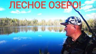 Рыбалка на спиннинг Дикое озеро