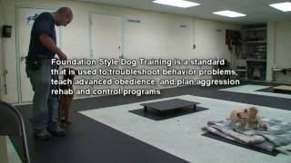 Foundation Style Dog Training (k9-1)