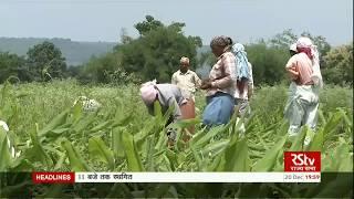 भारत में कृषि :- GDP में योगदान, समस्या, बदलता स्वरूप।।।।।