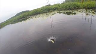 Crazy bass achigans au Lac la Pêche, Parc de la Gatineau