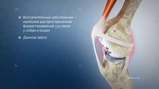 Воспалительные заболевания суставов у кошек и собак - рацион Hills PD j/d